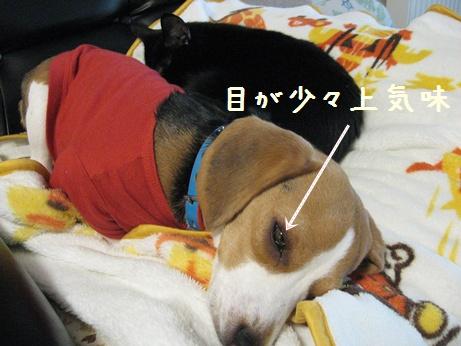 20100119_001_003